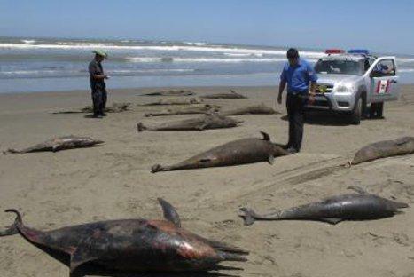 Delfines en el norte murieron por virus en el agua