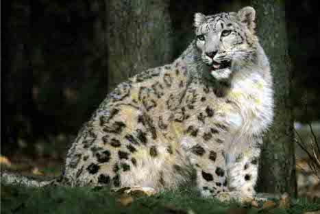 FOTOS: Estos son los 10 animales más amenazados del planeta, según WWF