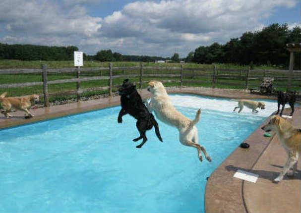 Divertido una jaur a de perros se divierte en una piscina for Piscinas para perros grandes