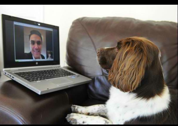 Tiernos perros conversan con sus dueños vía skype (VIDEO)