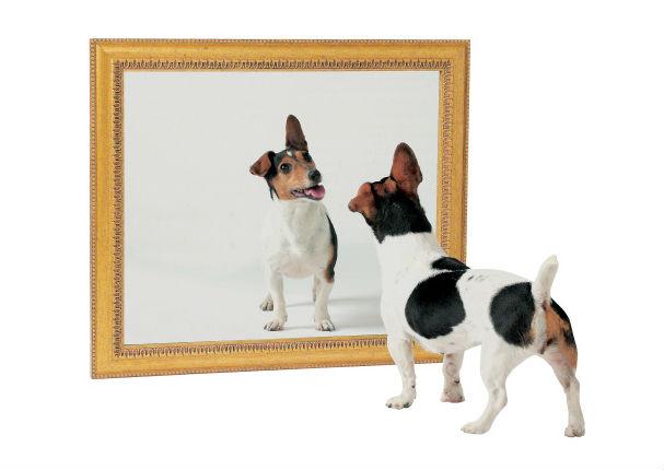 Descubre por qu los perros y gatos no pueden reconocer su for Espejo que no invierte la imagen