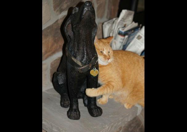 El gesto de esta gata con el perro fallecido de la familia te dejará con la boca abierta
