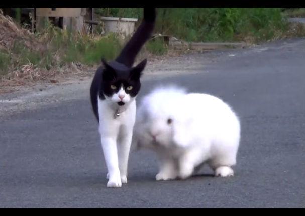 Un conejo y una gata se enamoran y tienen una cría, en Venezuela (VIDEO)