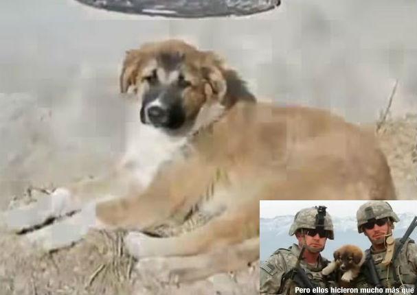 Este perro salvó la vida de 50 personas, conoce su historia aquí (VIDEO)