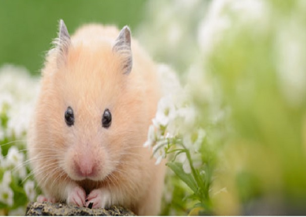 Esta es la mascota ideal para ti según tu signo del zodiaco