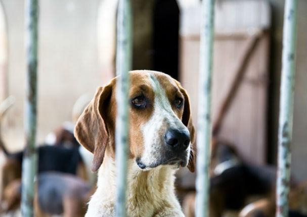 Congreso aprobó  ley contra el maltrato animal