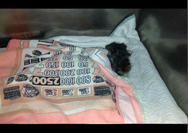 Facebook: Perrito es encontrado en la basura al borde la muerte, pero hoy… (FOTOS)