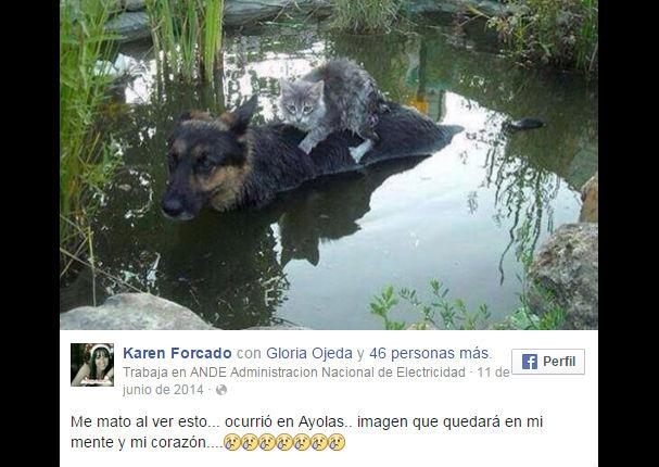 Facebook: La foto de este perro con un gato se volvió viral por una tierna razón...