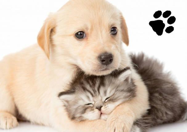 ¡Feliz día a tu mascota! 3 tips de cuidados para tu engreído