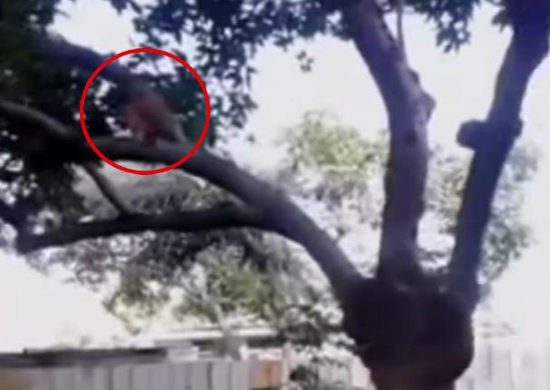 ¡Insólito! Hombre capta en vídeo a duende en su casa nueva