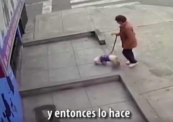 Perrito se queda triste y sufre tras ser abandonado por su dueña en la calle