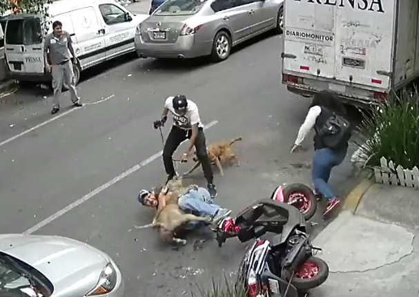 Hombre se enfrentó a pitbull para salvar a su perrito - VIDEO