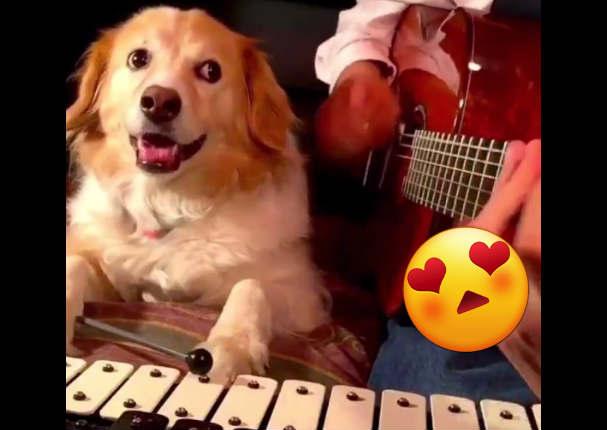 Perro músico se vuelve famoso en redes sociales y así suenan sus canciones - VIDEO