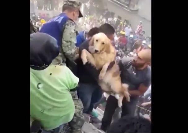 Rescate de perro entre los escombros alegró a mexicanos - VIDEO