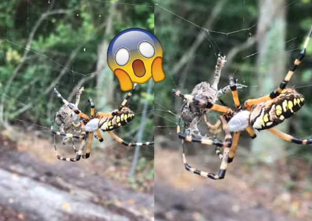 Araña atrapó a una rana en cuestión de segundos y todos quedaron sorprendidos