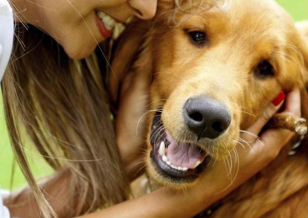 5 consejos para adoptar un perro