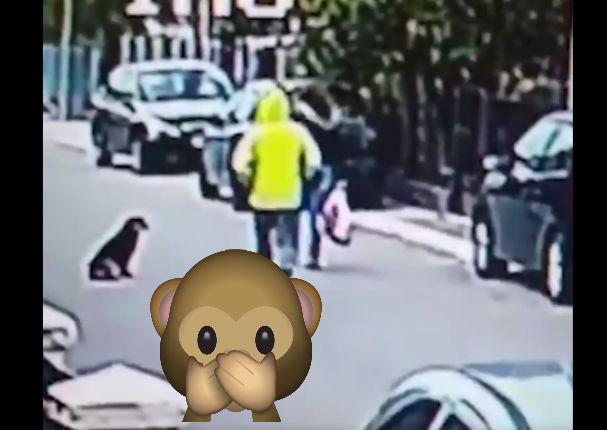Viral: Mira cómo este perro evita un robo (VIDEO)