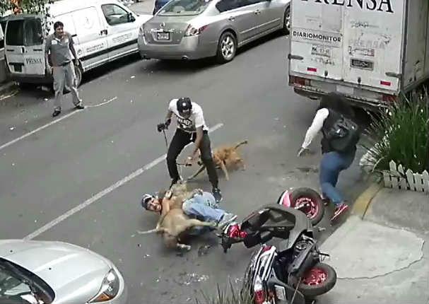 Hombre se enfrentó a pitbull para salvar a su perrito (VIDEO)