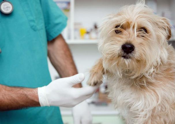 Municipalidad de Lima inauguró veterinaria con precios cómodos