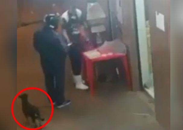 Facebook viral: Perrito roba comida a clientes despistados (VIDEO)