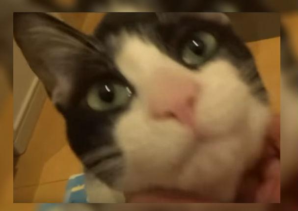 Youtube Viral: Gato encuentra a su dueño después de 3 días y su reacción enternece a todos