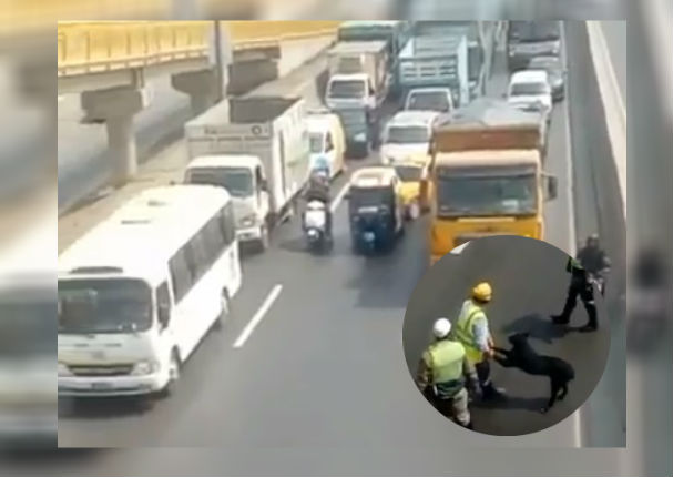 Facebook Viral: Policías detienen tránsito en Panamericana Norte para rescatar a 'perrito'