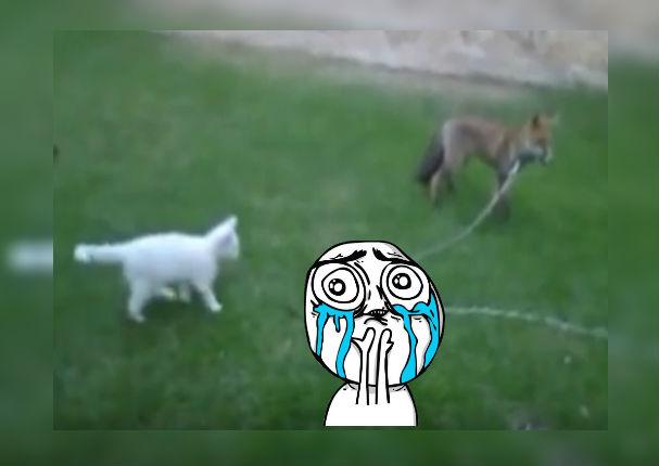 Youtube: Video de gato jugando con zorro se vuelve viral y divierte a usuarios (VIDEO)
