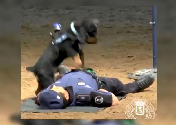 Viral: Perro le da primeros auxilios a policía y le 'salva la vida' (VIDEO)