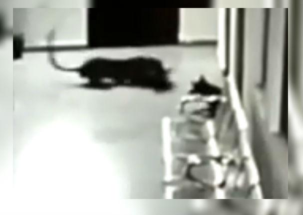 Facebook: Perra defiende a su cachorro de feroz leopardo y sucede lo inesperado (VIDEO)