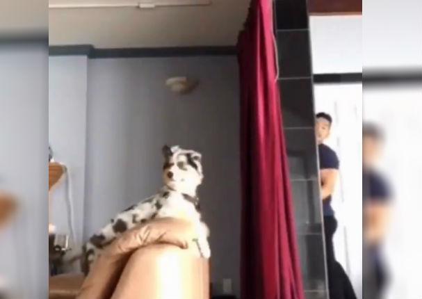 Facebook: Reacción de mascotas al ver desaparecer a sus dueños se vuelve viral
