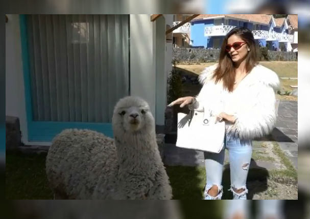 Laura Spoya sufre incidente tras intentar acariciar a una alpaca (VIDEO)
