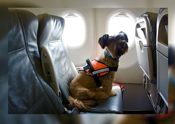 ¿Viajarás con tu mascota? Debes cumplir con estos requisitos