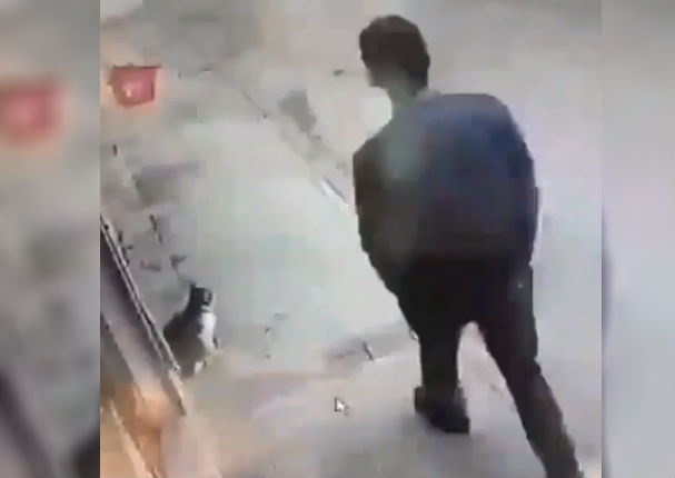 Instagram Viral: Gato ataca inesperadamente a transeúnte y provoca incidente (VIDEO)