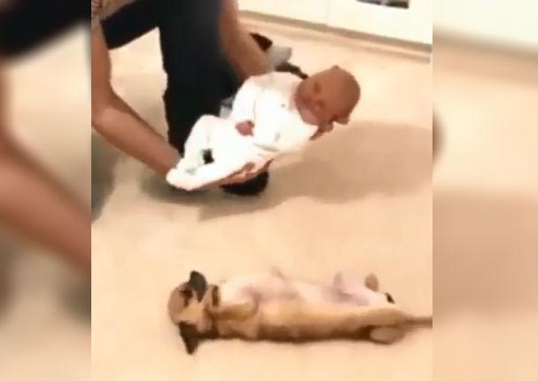 Perro ve al bebé de su dueño por primera vez y su reacción conmueve a todos (VIDEO)