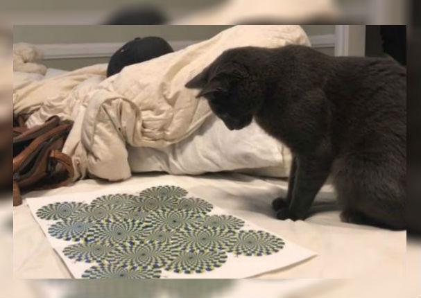 YouTube: Ilusión óptica deja hipnotizado a gato