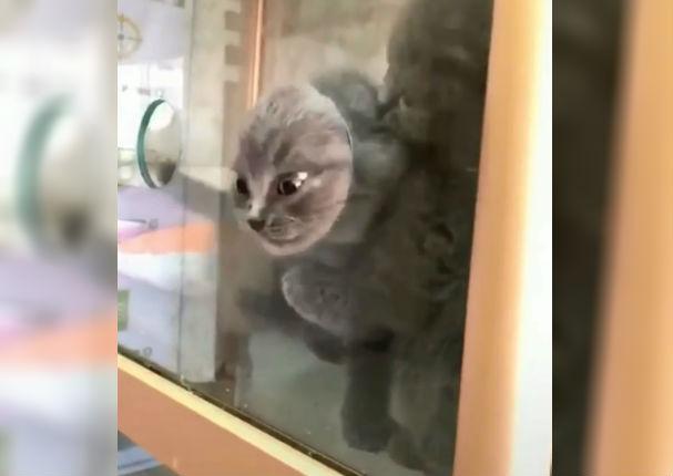 Instagram: Gatito intenta escapar por estrecho agujero y sucede esto (VIDEO)