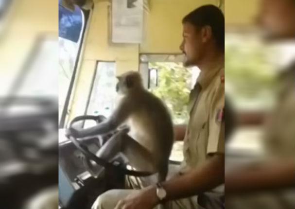 Youtube: Mono es la sensación en redes al saber manejar un autobús en India (VIDEO)