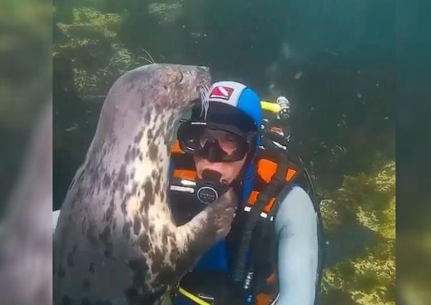 Viral: Lobo marino y buzo tuvieron tierno encuentro en el mar (VIDEO)