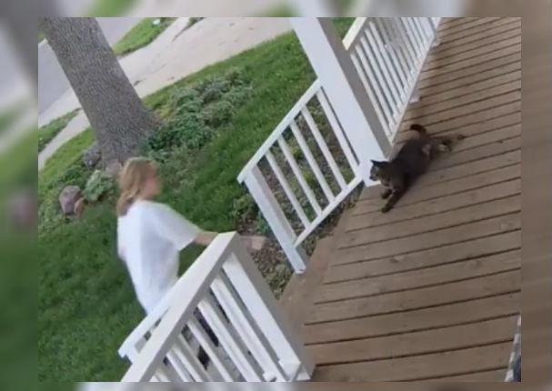 Cámara de seguridad graba el preciso momento en que un gato fue secuestrado (VIDEO)