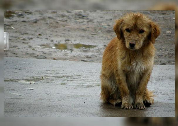 Por este motivo Holanda se convirtió en el primer país sin perros callejeros