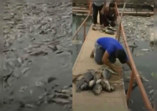 Actualidad: Miles de peces mueren misteriosamente en Irak
