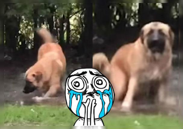 Perro se divertía en charco hasta que su dueño lo descubrió (VIDEO)