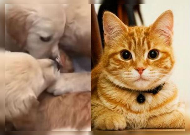 Youtube: 6 perros contra un gato se vuelve viral en redes