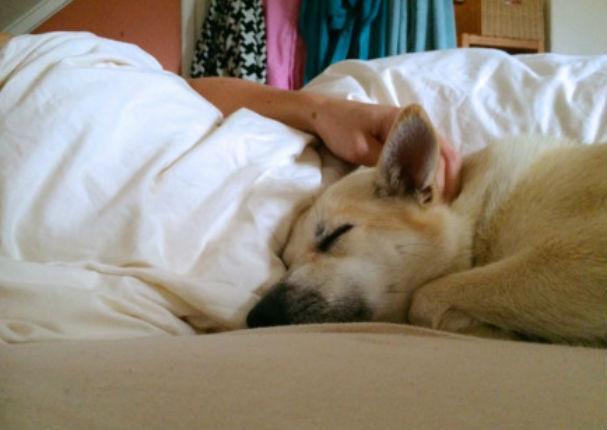 Estudios afirman que dormir con tu mascota mejora tu estado emocional