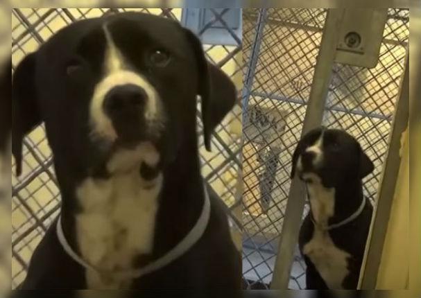 Viral: Mira la reacción de este perrito al descubrir que será adoptado (VIDEO)