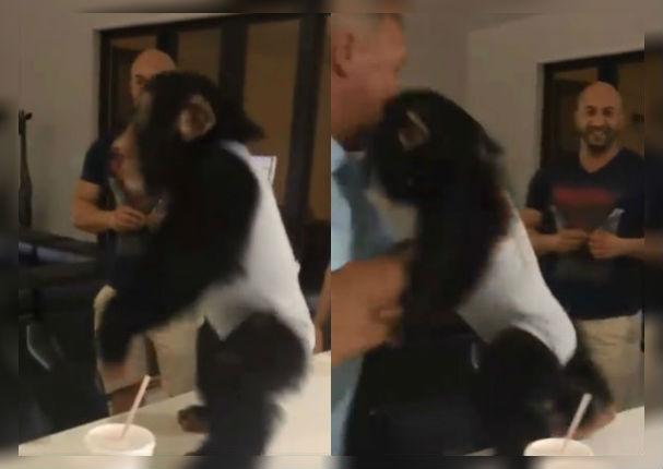 Veterinarios se reencuentran con el chimpancé que rescataron y esta fue su reacción (VIDEO)