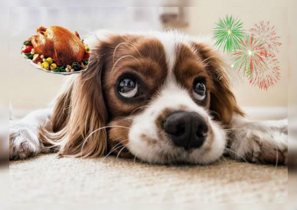 ¿Chocolate y pavo para tu mascota? Lo puede matar
