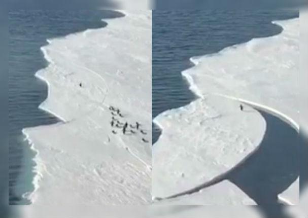 Facebook: Pingüino conmueve al correr por su vida mientras es separado de su familia (VIDEO)