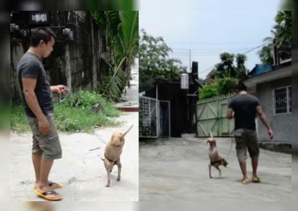Perro discapacitado conmueve al mundo tras caminar en dos patas (VIDEO)