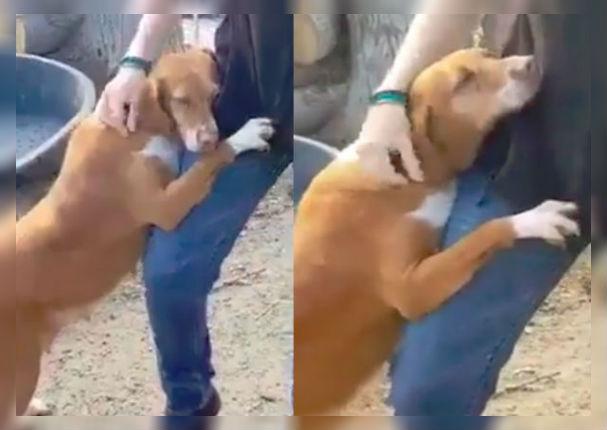 Facebook: Perro abandonado le suplica a un periodista que lo adopte (VIDEO)